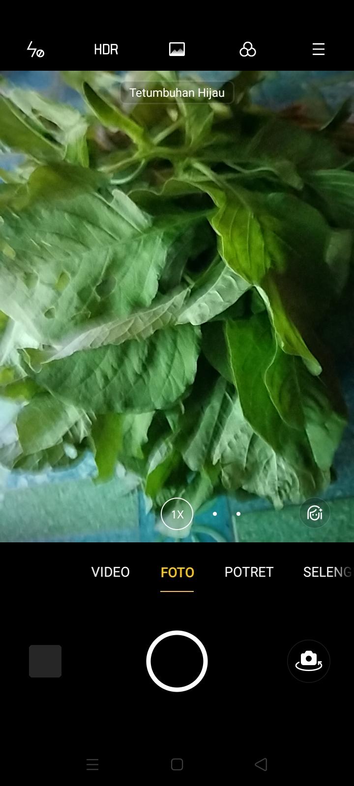 Bayam, Sirajanya Sayur-Sayuran